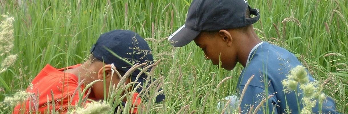 Children looking for bugs in the grass